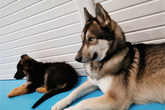 Manchester local dog daycare