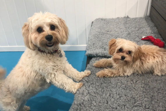 Dogs at doggy day care Manchester