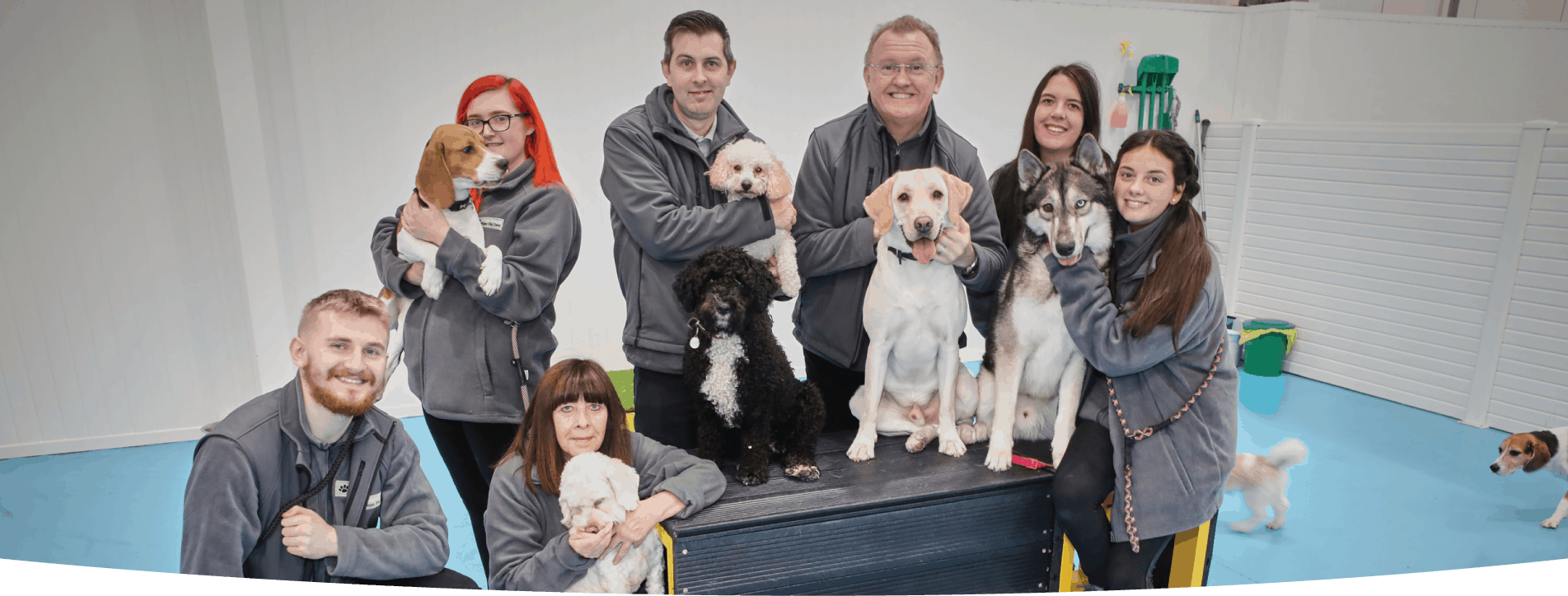 Our doggy daycare Greater Manchester dogs