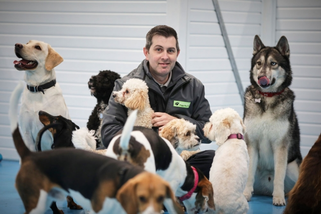 Pack of our dogs in doggy day care