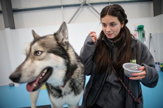 Dog kennels near me in Trafford Park