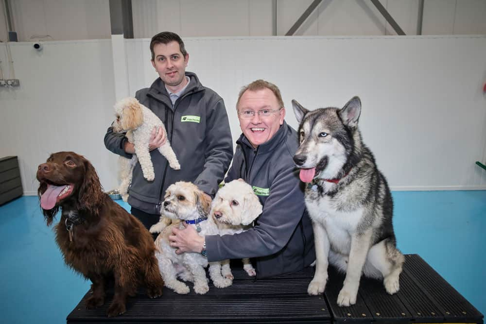 dog daycare near me in Manchester