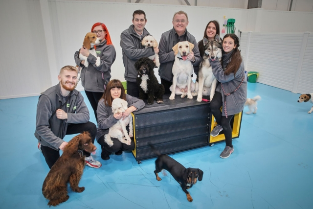 Dog pack at dogs aloud