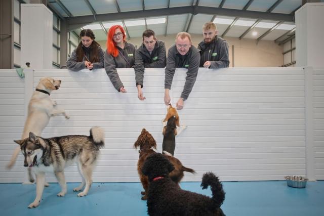 dog training in Trafford Park