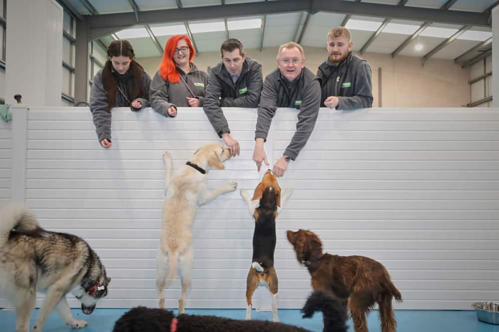 doggy daycare Trafford