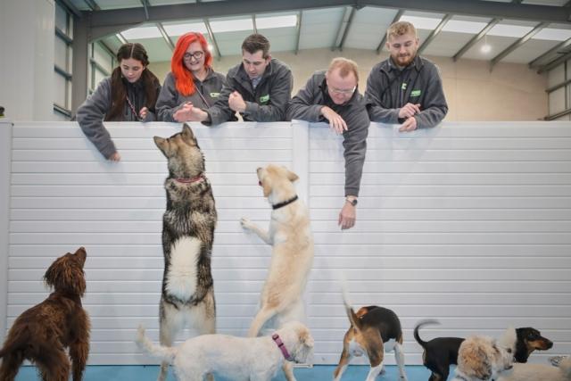 doggy daycare Trafford Park