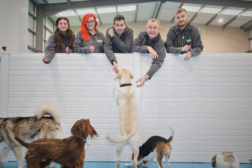doggy daycare Manchester
