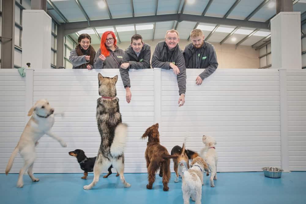 dog daycare near me in Trafford