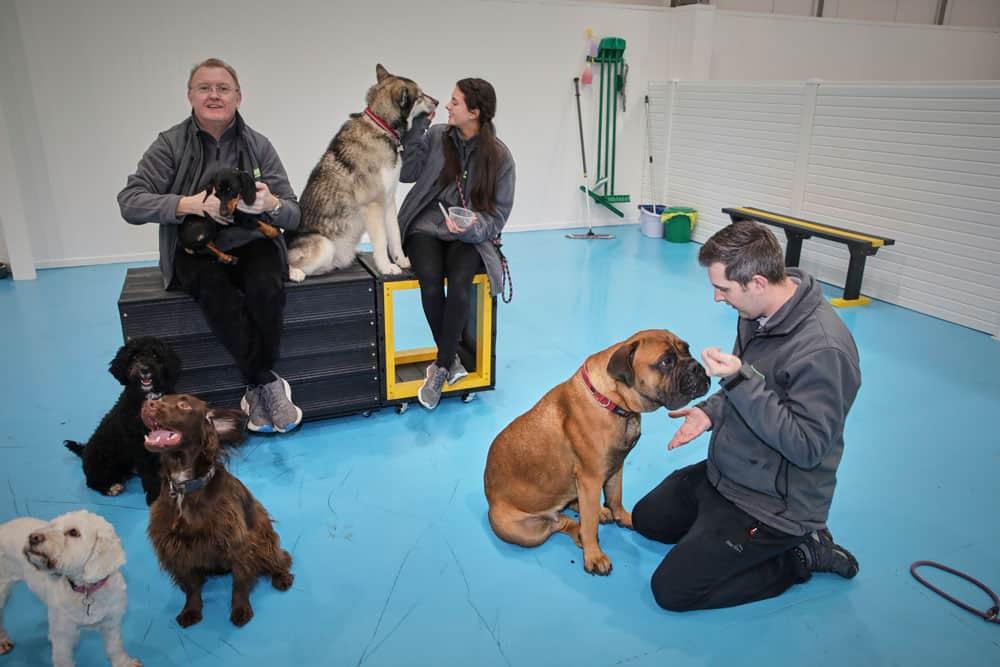 dog training at Dogs Aloud