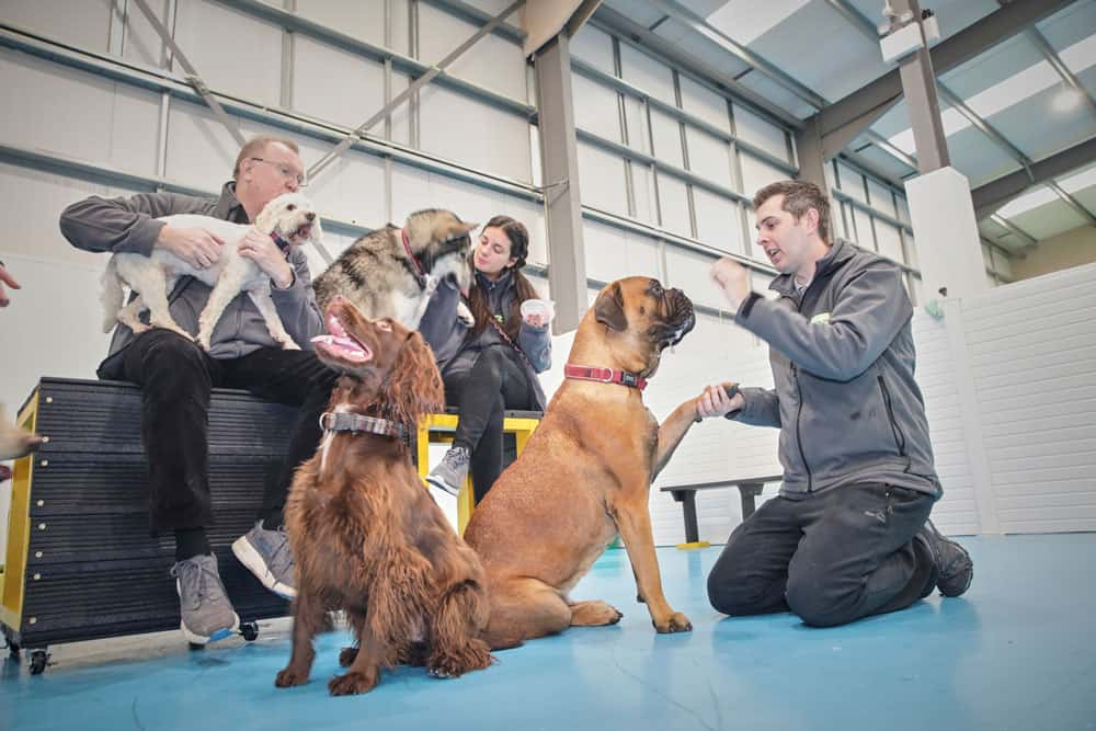 Dog training with Allan Todd