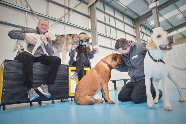 Dog training with Allan Todd at Dogs Aloud