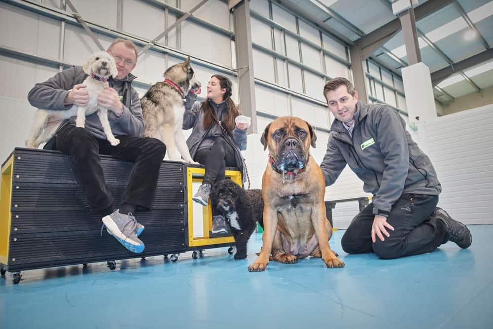 dog daycare Trafford