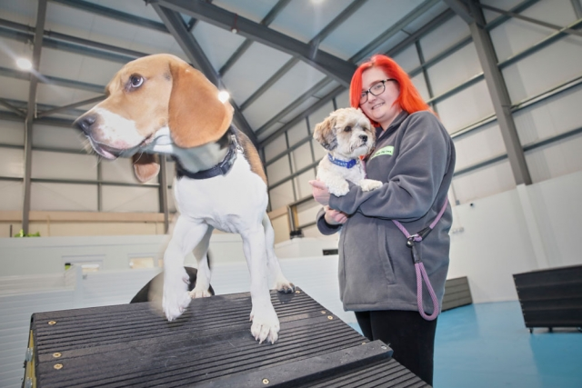 Laura and our dogs at dogs aloud