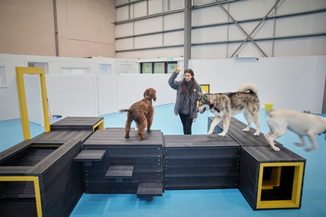 Amy with our big dogs at dogs aloud